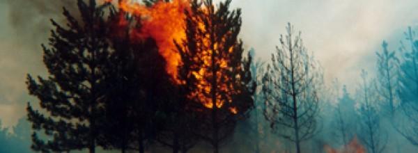 """""""No es descabellado pensar que el fin del incendio tiene que ver con intereses inmobiliarios"""""""